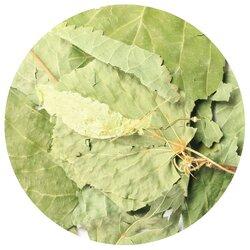 Липа цвет крупный лист в чайном магазине BestTea, фото